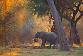AFW 04 TL0015 01
