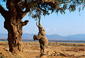 AFW 04 TL0017 01