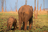 AFW 04 TL0018 01
