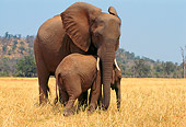 AFW 04 TL0019 01