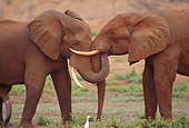 AFW 04 TL0020 01