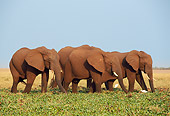 AFW 04 TL0022 01