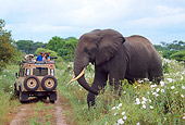 AFW 04 TL0023 01