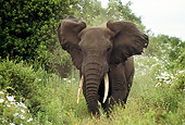 AFW 04 TL0035 01