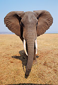 AFW 04 TL0049 01