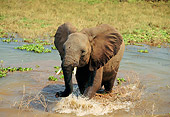 AFW 04 TL0050 01