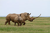 AFW 05 DB0008 01