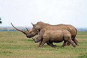 AFW 05 DB0009 01