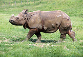 AFW 05 GL0004 01