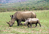 AFW 05 GL0005 01