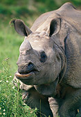 AFW 05 GL0009 01