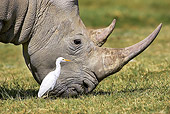 AFW 05 GL0013 01