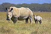 AFW 05 GL0020 01