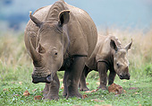 AFW 05 GL0027 01