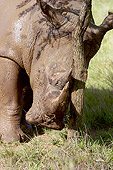AFW 05 HP0009 01