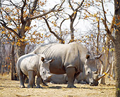 AFW 05 JZ0001 01