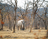 AFW 05 JZ0007 01