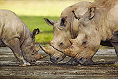 AFW 05 MH0017 01