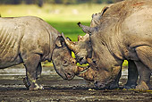 AFW 05 MH0018 01