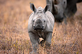 AFW 05 MH0040 01
