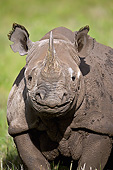 AFW 05 MH0043 01