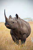 AFW 05 MH0045 01