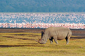 AFW 05 NE0028 01