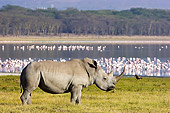 AFW 05 NE0005 01