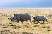 AFW 05 NE0010 01