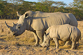 AFW 05 NE0012 01