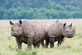 AFW 05 NE0026 01