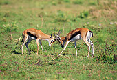 AFW 06 GL0003 01