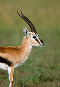 AFW 06 MH0003 01