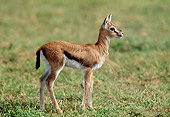 AFW 06 MH0004 01