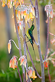 AFW 07 AC0006 01