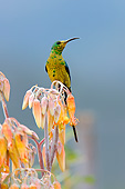AFW 07 AC0007 01
