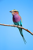 AFW 07 AC0009 01