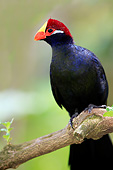 AFW 07 AC0010 01