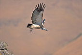 AFW 07 HP0004 01