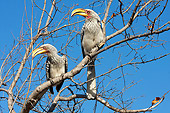 AFW 07 HP0005 01