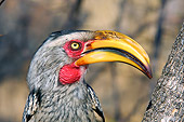 AFW 07 HP0006 01