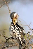 AFW 07 HP0008 01