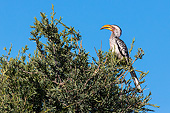 AFW 07 KH0001 01