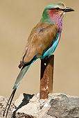 AFW 07 MC0010 01