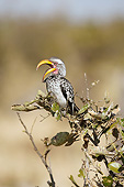 AFW 07 MC0013 01