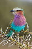AFW 07 NE0002 01