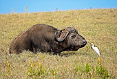 AFW 08 GL0001 01