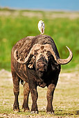 AFW 08 MH0005 01