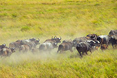 AFW 08 MH0028 01