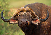 AFW 08 SM0015 01
